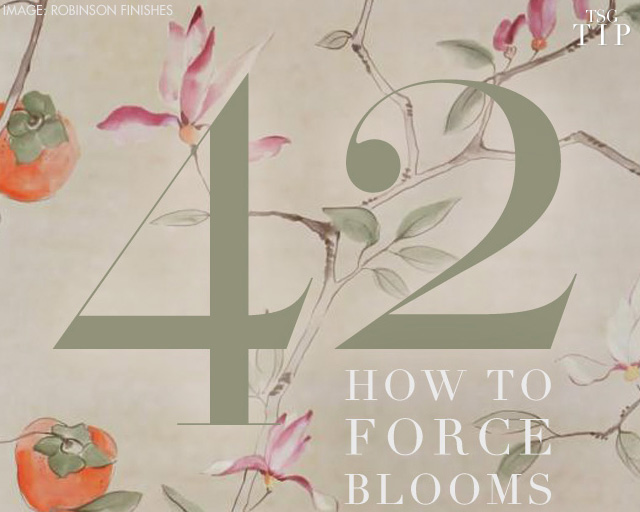 Forcing Blooms