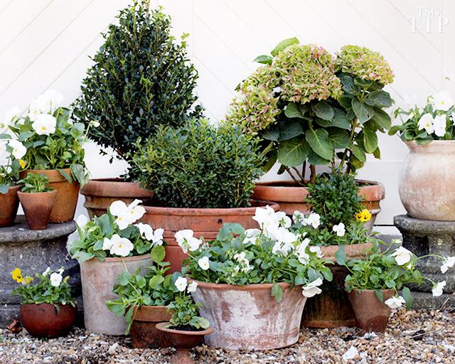 Monoculture Gardens