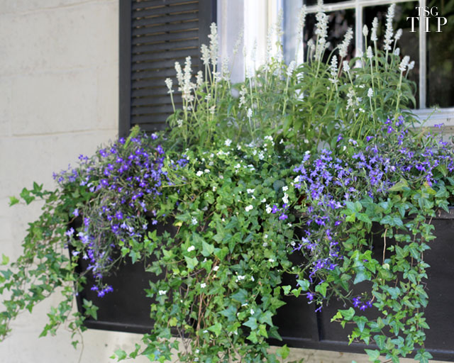 The Keys to Stunning Window Boxes
