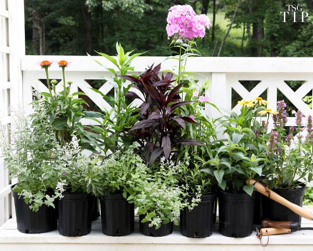 ivy nursery garden tip
