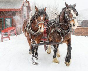 Snowed Inn Sleigh Company