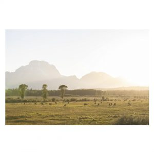 Purchase Golden Hour in the Tetons